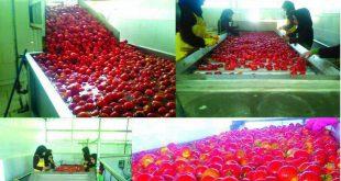 بهترین رب گوجه