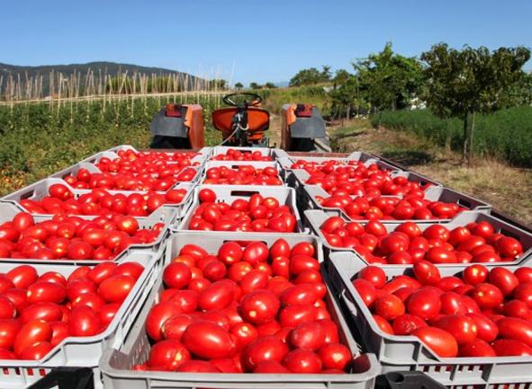 فروش رب گوجه