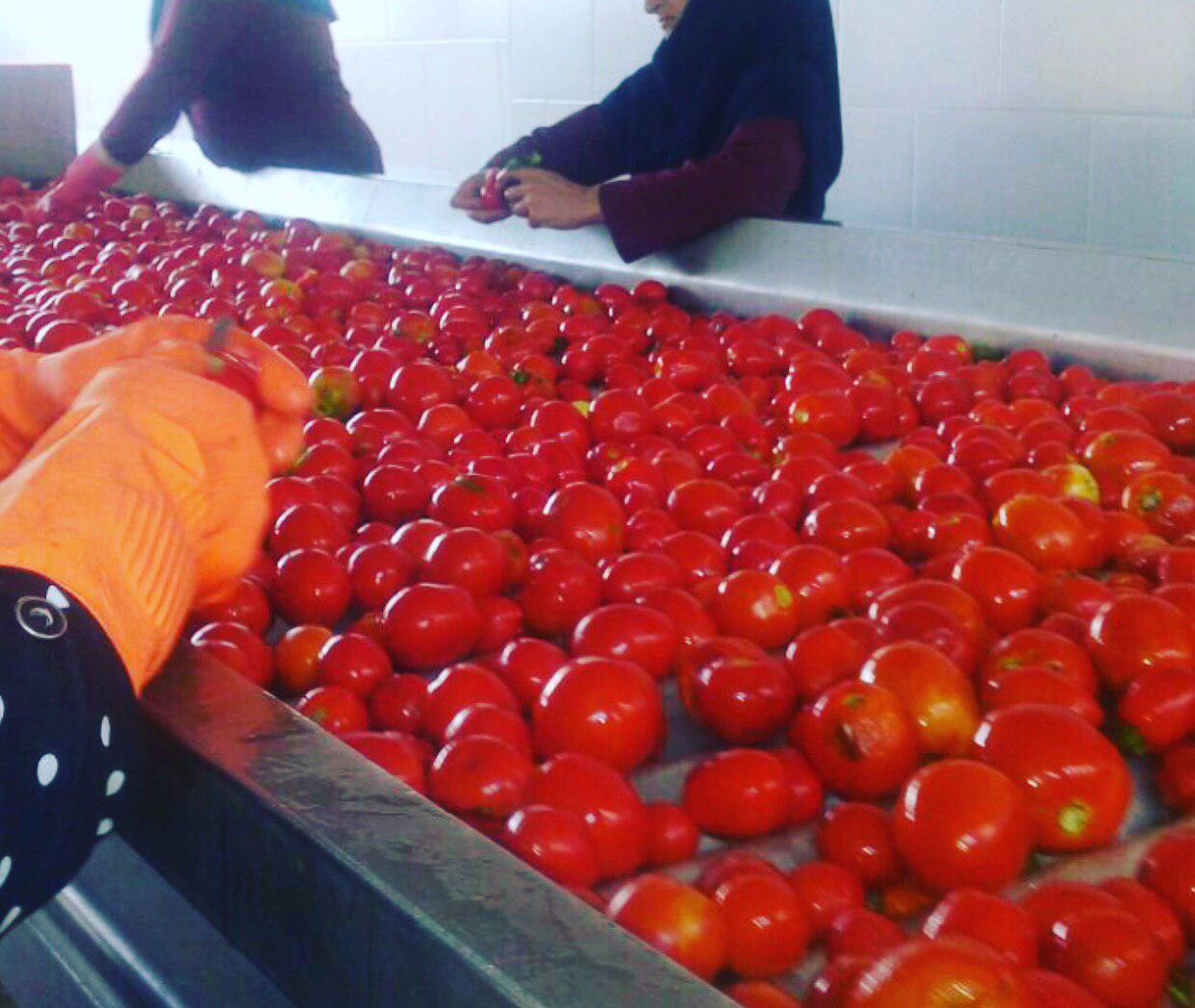 تولید رب گوجه کارخانه