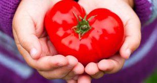 آشنایی با خواص و مضرات گوجه فرنگی