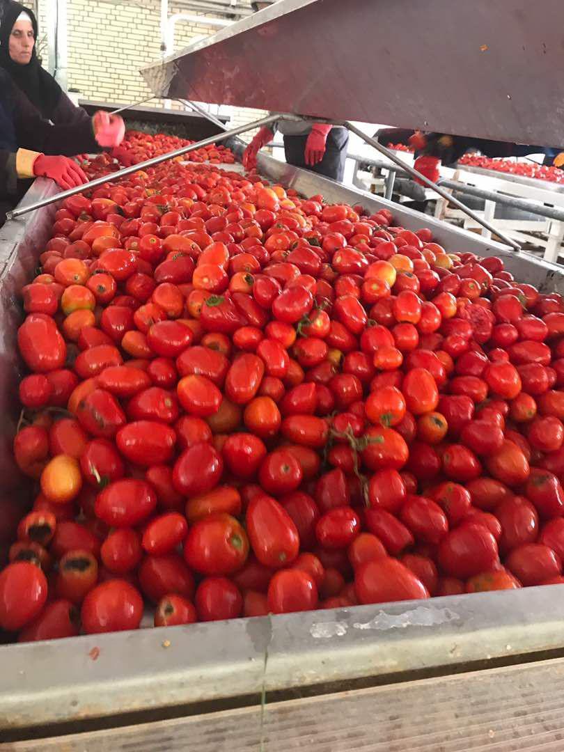 بهترین کارخانه رب گوجه فرنگی